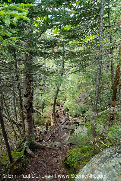Watson Path in the Northern Presidential Range of the White Mountain National Forest of New Hampshire USA.