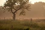 Europa, DEU, Deutschland, NRW, Nordrhein-Westfalen, Eifel, Nordeifel, Monschau, Morgenstimmung, Nebel, Landschaft, Kategorien und Themen, Natur, Umwelt, Landschaft, Jahreszeiten, Stimmungen, Landschaftsfotografie, Landschaften, Landschaftsphoto, Landschaftsphotographie, Wetter, Wetterelemente, Wetterlage, Wetterkunde, Witterung, Witterungsbedingungen, Wettererscheinungen, Meteorologie, Wettervorhersage<br /> <br /> [Fuer die Nutzung gelten die jeweils gueltigen Allgemeinen Liefer-und Geschaeftsbedingungen. Nutzung nur gegen Verwendungsmeldung und Nachweis. Download der AGB unter http://www.image-box.com oder werden auf Anfrage zugesendet. Freigabe ist vorher erforderlich. Jede Nutzung des Fotos ist honorarpflichtig gemaess derzeit gueltiger MFM Liste - Kontakt, Uwe Schmid-Fotografie, Duisburg, Tel. (+49).2065.677997, ..archiv@image-box.com, www.image-box.com]