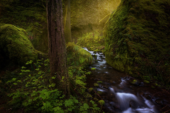 While hiking alone early one morning, I stumbled upon this intimate scene along the creeks of the Columbia River Gorge wilderness.<br />