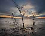 Frozen landscape with small bare tree and setting sun