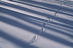 Footprints in a snowy woods.