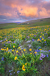 Columbia Hills State Park, Washington:<br /> Approaching storm at sunrise with lupine and balsam root blooming on a hillside in the Columbia Hills above the Columbia River