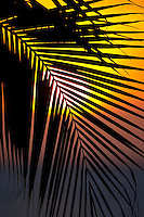 Sunset through a palm tree frond as seen from the Plaza Resort, Bonaire, Netherlands Antilles.
