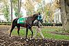 Secret Treasour before The Delaware Park Arabian Juvenile Championship at Delaware Park on 10/27/12...