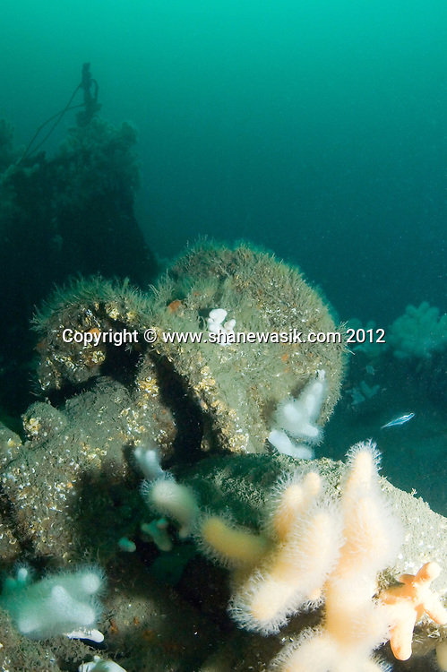 A large capstan points towards the surface on the wreck of the S.S. Exmouth