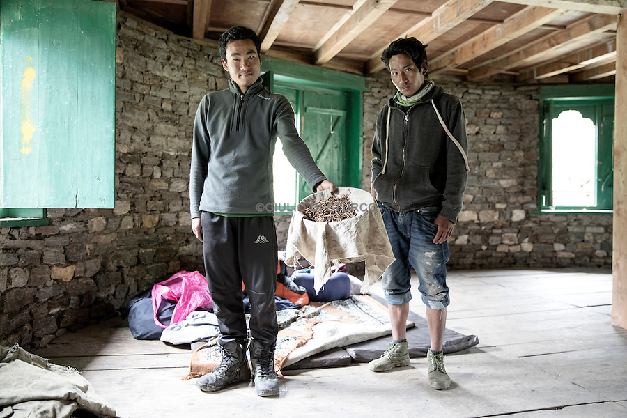 Sanghe , 25, went up with his friend Chencho to be snapped up cordycep . They bought a thousand by the nomads to $ 3.5 each time sell at $ 8 each to Paro down in the valley .