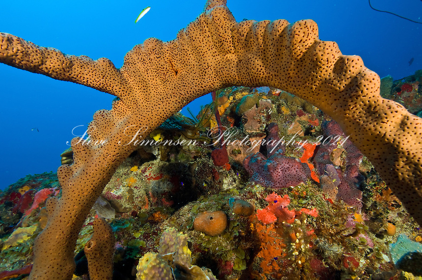 Underwater scenic with sponges<br />