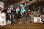 SEBRA - Raphine, VA - 11.9.2013 - Bulls & Action
