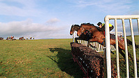 PICTURE BY BEN DUFFY/SWPIX - Some of Ferdy Murphy's horses make their way over the fences  on Middleham Moor