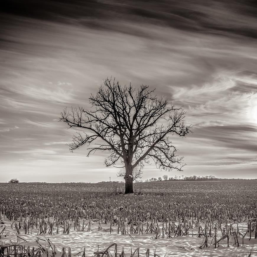WINTER WIND -- A cornfield just outside Deforest , Wisconsin, USA. #michaelknapstein #midwest #midwestmemoir #blackandwhite #B&amp;W #monochrome #instblackandwhite #blackandwhiteart #flair_bw #blackandwhite_perfection #motherfstop #wisconsin #blackandwhiteisworththefight #bnw_captures #bwphotography #myfeatureshoot  #fineartphotography #americanmidwest #squaremag #lensculture #mifa #moscowfotoawards #moscowinternationalfotoawards #rps #royalphotographicsociety #CriticalMass #CriticalMassTop200 #photolucida #contemporaryphotography <br /> @thec4fap #fineartphotography #portfolioshowcase11