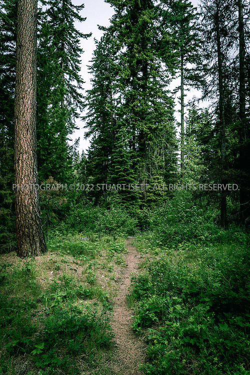 5/31/2015&mdash;Cle Elum, Washington, USA<br /> <br /> <br /> The Twentynine Pines Campground, on Teanaway Road North Fork in Cle Elum, Washington.  Here a path leads down to the North Fork Teanaway River.<br /> <br /> A Kittitas County sheriff&rsquo;s deputy, called to the camp following reports of unattended children there, described a feeling that there was &ldquo;some kind of cult activity&rdquo; going on at Melford Warren Jr.&rsquo;s&nbsp;campsite, which was near the North Fork Teanaway River which runs next to the camp. Now, investigators claim Warren, 43, was nearby when deputies arrived on Sept. 15, raping one of his 12&nbsp;children.<br /> <br /> Melford Warren Jr., 43, lived with his two lovers, Shannon Felicia Ann Smith, 41, and Amanjot Kaur Jaswal, 28 in Port Orchard, Washington. Warren has been charged with child rape and related crimes on allegations stemming from his family&rsquo;s stay at this Port Orchard home.<br /> <br /> Photograph by Stuart Isett<br /> &copy;2015 Stuart Isett. All rights reserved.