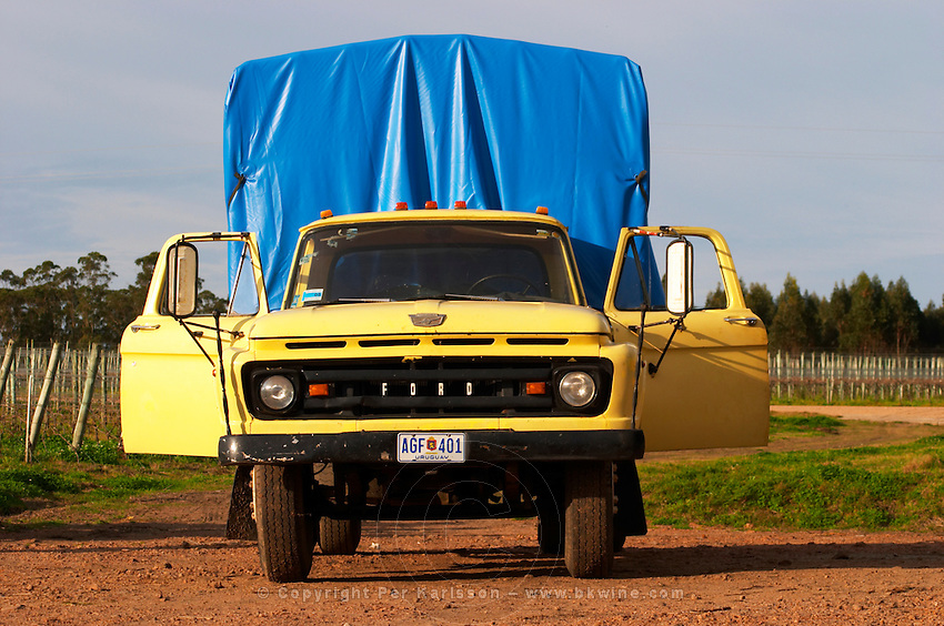 An old ford truck, yellow, with the doors open and with a bright blue tarpaulin cover at the back, in the vineyard. Vinedos y Bodega Filgueira Winery, Cuchilla Verde, Canelones, Montevideo, Uruguay, South America