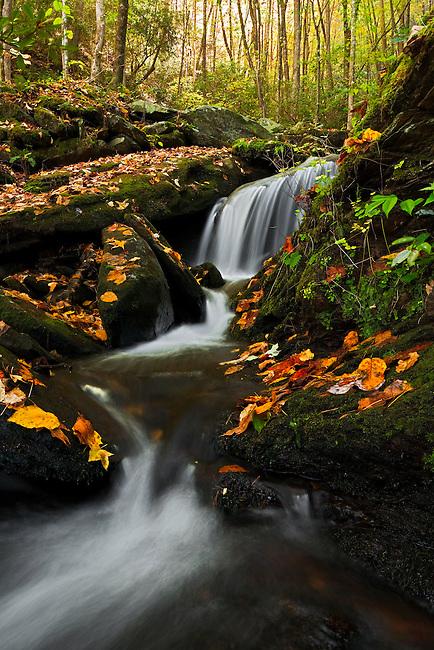 Cascade and fallen autumn leaves