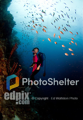 17 August 2005: Scuba diver Sally Herschorn glances at the schooling fish at Small Wall Reef off the coast of Bonaire, in the Netherland Antilles. Housing used was an Aquatica D100 with 8 inch dome port. Lighting with single Ikelite 225s strobe, manual at 1/4 power setting...Mandatory Photo Credit: Ed Wolfstein Photo