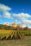 USA, Oregon, Medford, the RoxyAnn Winery was founded in 202 at the historic Hilcrest Orchard in east Medford and is one of Southern Oregon's oldest orchards