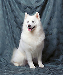 samoyed Shopping cart has 3 Tabs:<br />