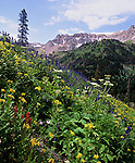 wildflowers, Yankee Boy Basin, Rocky Mountains, Colorado