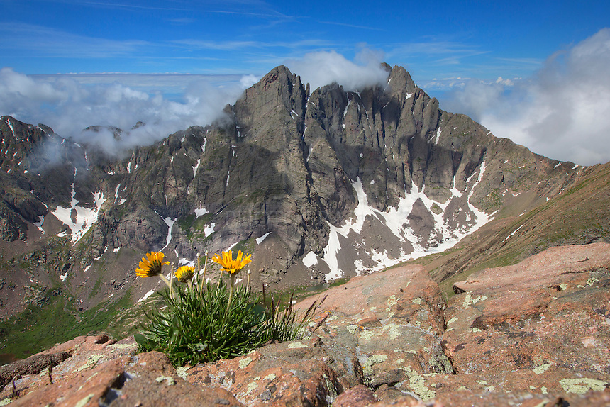On the way down from Humbolt Peak (14,064 feet), I stopped to photograph this little Colorado wildflower clinging to a ledge. While laying on my side with my legs dangling over the cliff, I had a great view of Crestone Needle (14,197) and Crestone Peak (14,294). In the distance, clouds were spilling over two of the Rocky Mountains most majestic peaks. But I couldn't linger long - it was still 7.5 miles and 5,000 feet down to our car and storms were moving in behind me.
