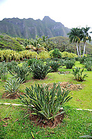 Open garden space with Koolau Mountain Range in background. Oahu, Hawaii
