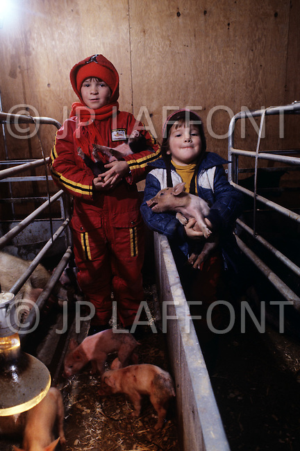 Quebec, Canada, March 1978. Daily life in Quebec. Swine breeding.