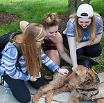 Left to right, Sarah Pelletier, Rachel Bell, and Betsy Duck pet Buddy, a therapy dog from Go Team, a non-profit organization that trains therapy, crisis and service dogs, on the Lincoln Park Quad for Dogs on the Quad, an event hosted by the DePaul Activities Board and Health Promotion and Wellness team, Wednesday, May 31, 2017. Therapy dogs were on hand to help students deal with the stress and anxiety that often comes up during finals. The event was part of Brain Fuel Week, a week of events designed to help students de-stress as they head into finals. (DePaul University/Arielle Toub)