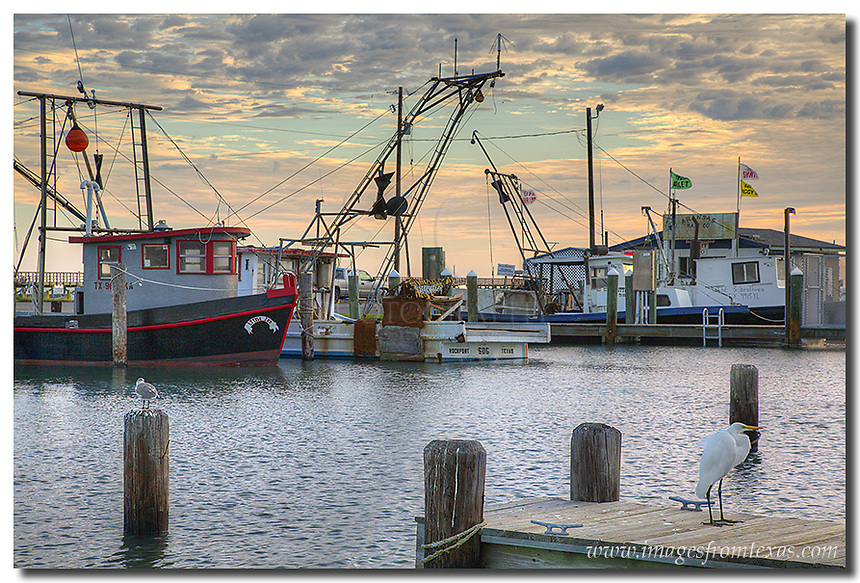 Two birds watched me watching them in this image from Rockport, Texas. The harbor protects the boats from the waves on windy days, and this morning was no exception. The moring clouds were nice, but the breeze was constant as the shrimp boats returned from their search for food along the Texas coast.