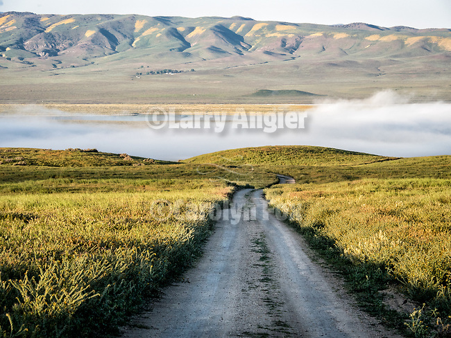 A road toward the Elkhorn Scarp and morning fog bank over Carrizo Plain National Monument.<br /> <br /> Wildflowers cover the Caliente Range in spring.