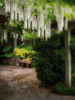 Wisteria trellis. The Oregon Garden. Silverton, Oregon