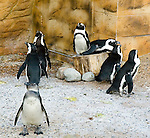 Penguins at The New Jersey State Aquarium