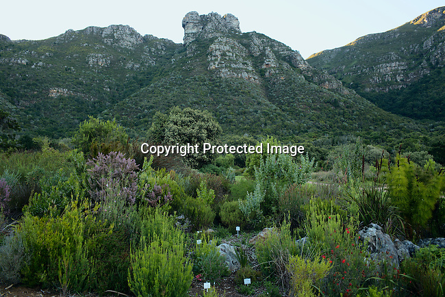 A view of the flora at Kirstenbosch Botanical Garden outside Cape Town, South Africa. It was founded in 1913 and it is the biggest one in the country. Cape Town has become one of the worlds must see cities, with its natural beauty, beautiful weather and reasonable priced restaurants. (Photo by: Per-Anders Pettersson)