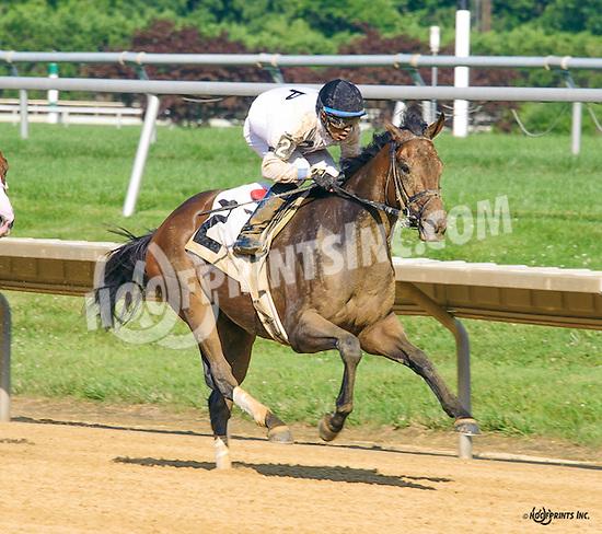 Packer Jack winning at Delaware Park on 7/6/16