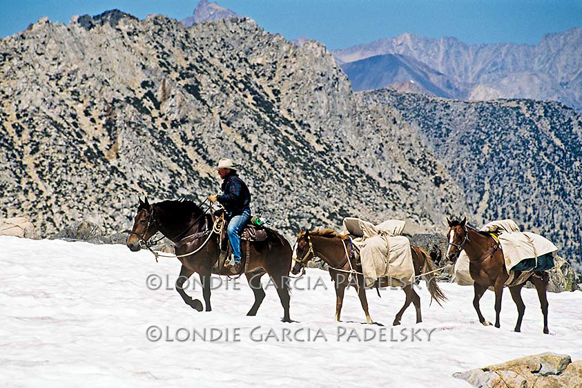 Cowboy leading pack horses over snow covered Bishop Pass trail-elevation 11,000 feet. Sierra Nevada, California