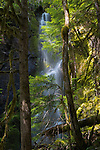 Unnamed seasonal waterfall, Gifford Pinchot National Forest