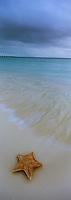 Iles Bahamas /Ile de Long Island: étoile de mer sur la plage de l'Hotel Cape Santa Maria et océan Atlantique