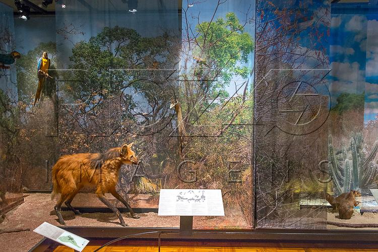 Animais expostos no Museu de Zoologia da Universidade de São Paulo, São Paulo - SP, 12/2016.