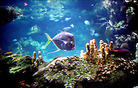 Acquario di Genova ### Genoa, acquarium