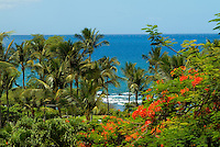 Lush foliage, red flowering trees, and coconut palms front the beautiful blue water of Wailea beach on West Maui.