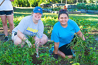 Freshmen Erin Stanley and Mikayla Mazzotta volunteer at the Methodist Community Gardens in Middletown while taking part in the Salve Regina Service Plunge.