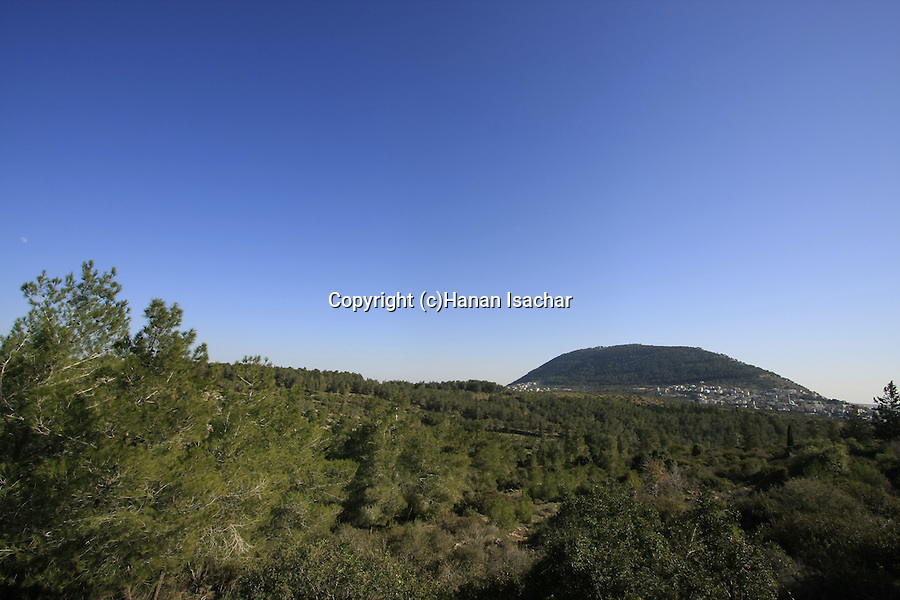 Israel, Lower Galilee. Bet Keshet forest, Mount Tabor is in the background