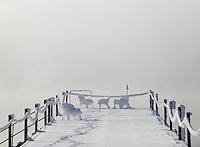 Germany, Bavaria, Upper Bavaria, Winter in Werdenfelser Land: winter scenery at Kochel Lake