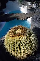 Europe/Espagne/Canaries/Lanzarote/Env de Teguise/Taro de Tahiche : Fondation César Manrique dans l'ancienne demeure de l'artiste - Piscine et cactus