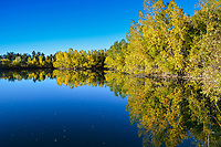 Stunning Autumn leaves are reflected in Ketring Lake on a perfect Colorado fall day.