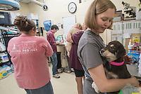 Homeward bound puppies