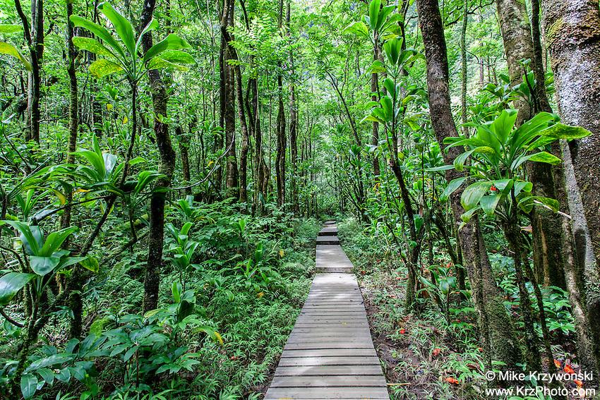 Trail leading through thick forest, Pipiwai hiking trail, Haleakala National Park, Kipahulu, Maui