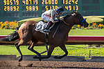 ARCADIA, CA  JULY 6: #2 Marley's Freedom, ridden by Drayden Van Dyke, in the stretch of the Great Lady M Stakes (Grade ll) on July 6, 2019 at Los Alamitos Race Course, in Cerritos, CA. (Photo by Casey Phillips/Eclipse Sportswire/CSM)