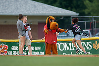 Batavia Muckdogs mascot Dewey oversees an on field promotion during a NY-Penn League game against the State College Spikes on July 2, 2019 at Dwyer Stadium in Batavia, New York.  Batavia defeated State College 1-0.  (Mike Janes/Four Seam Images)
