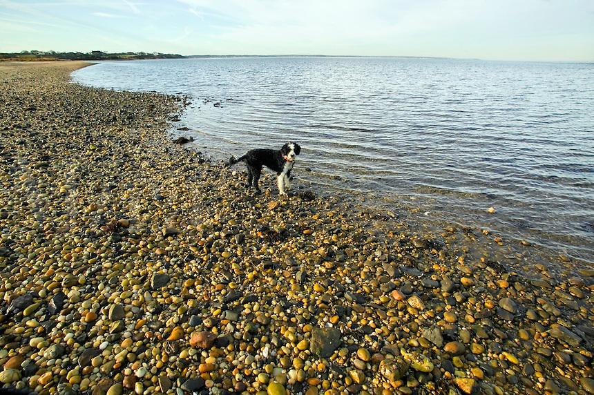 Dog along rocky beach.