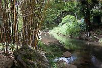 Bamboo along the Waimea River in Waimea Falls Park, North Shore, Oahu