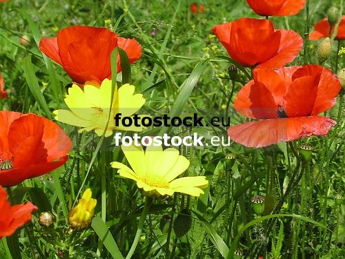 Meadow in spring in Majorca<br /> <br /> pradero en primavera en Mallorca<br /> <br /> Fr&uuml;hlingswiese auf Mallorca<br /> <br /> 2272 x 1704 px<br /> 150 dpi: 38,47 x 28,85 cm<br /> 300 dpi: 19,24 x 14,43 cm