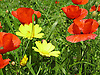 Meadow in spring in Majorca<br /> <br /> pradero en primavera en Mallorca<br /> <br /> Frühlingswiese auf Mallorca<br /> <br /> 2272 x 1704 px<br /> 150 dpi: 38,47 x 28,85 cm<br /> 300 dpi: 19,24 x 14,43 cm